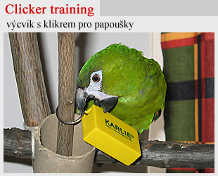 Clicker training s papoušky